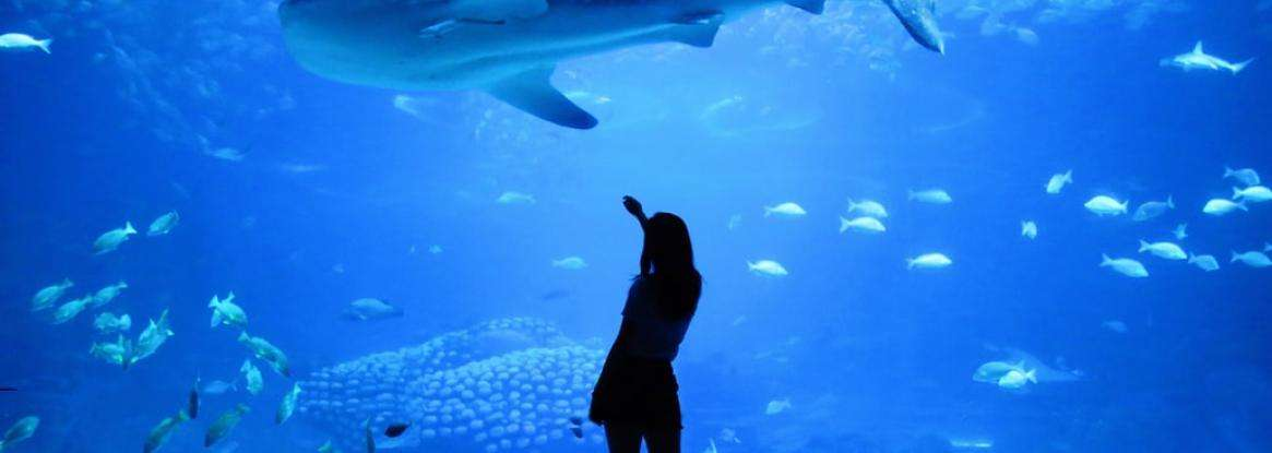 Magical moments for all ages at the Paris Aquarium